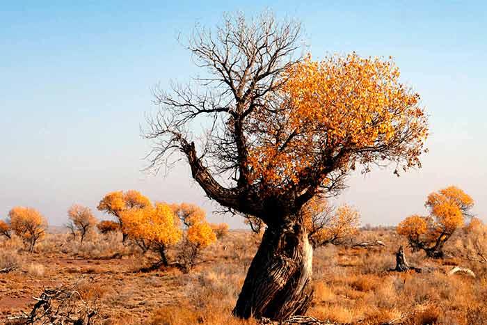 What if half the tree has no leaves half dry tree