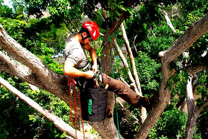 what is a tree arborist