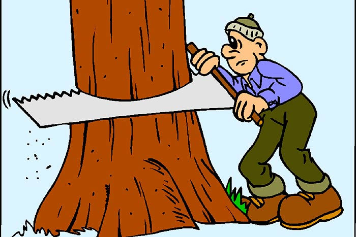 Will insurance pay for dead tree removal removal company