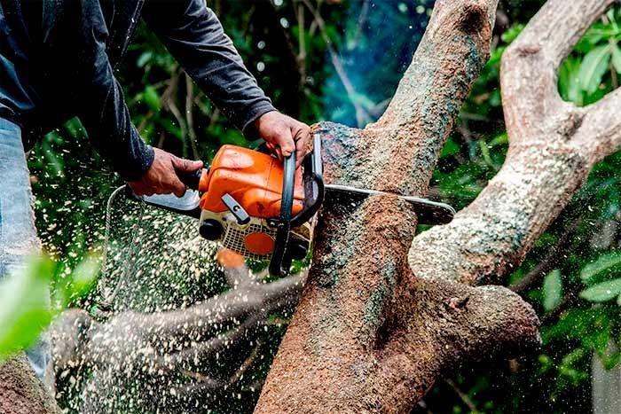 arborist vs tree surgeon