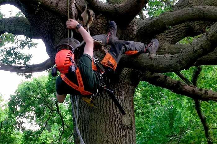 are arborist in demand