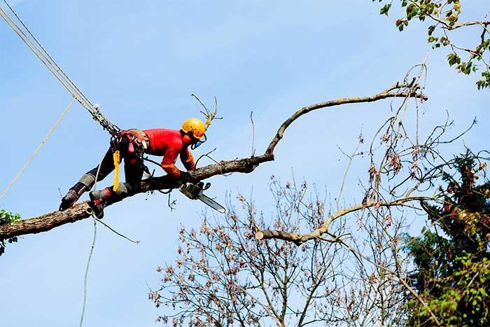 is being an arborist dangerous