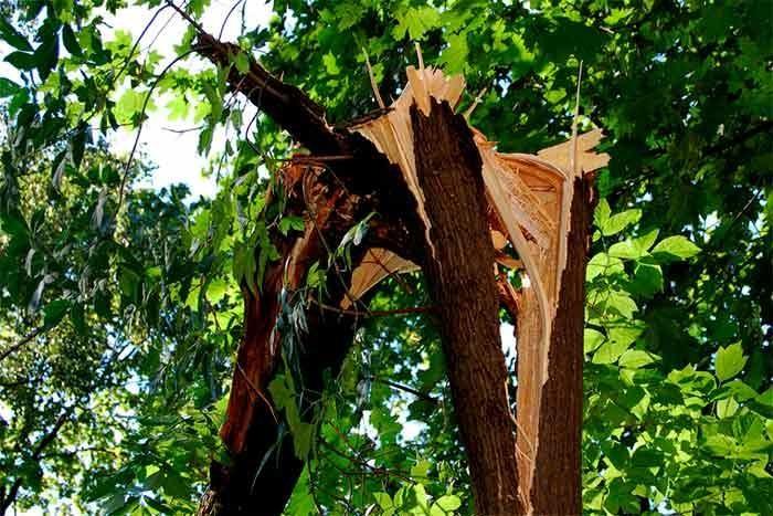 Neighbors tree broke and fell on fence