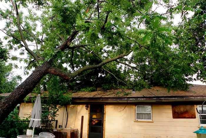 neighbors tree fallen on house