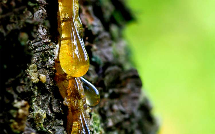 Tips For Removing Sticky Tree Sap