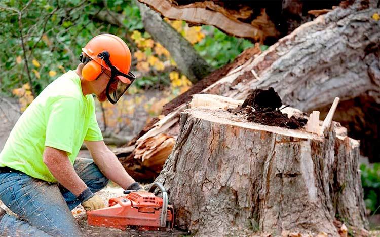 Tree Service Company   Local Cost & Hiring Guide 2021