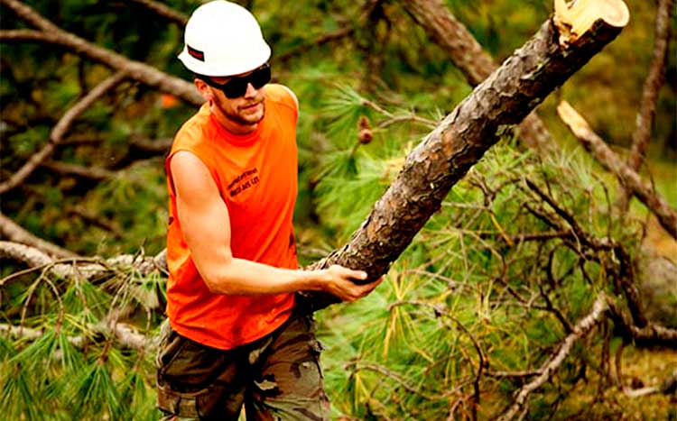 What do you tip a tree service company man hold the tree