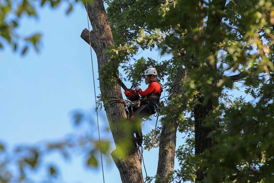 arborist who cuts down trees