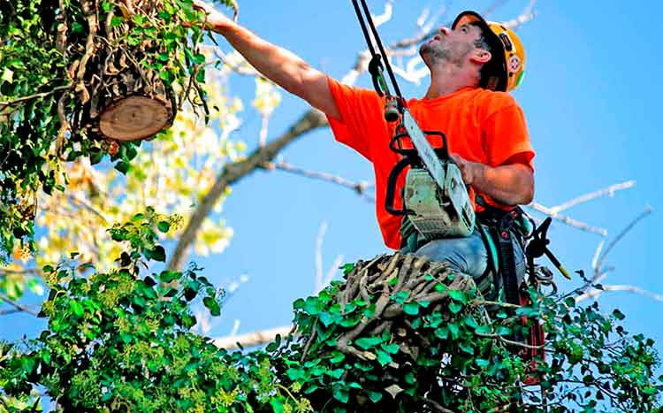 Choosing a good tree removal services near me man works