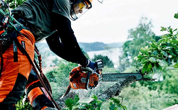 Difference between a level 3 & level 5 arborist prof work