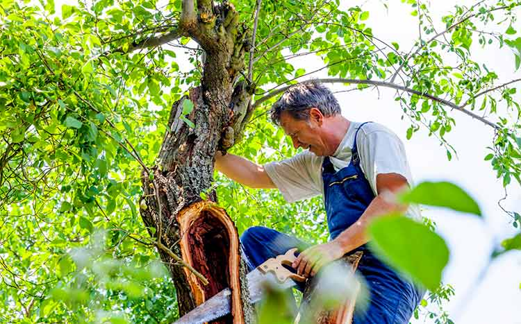 FAQ's Tree Services
