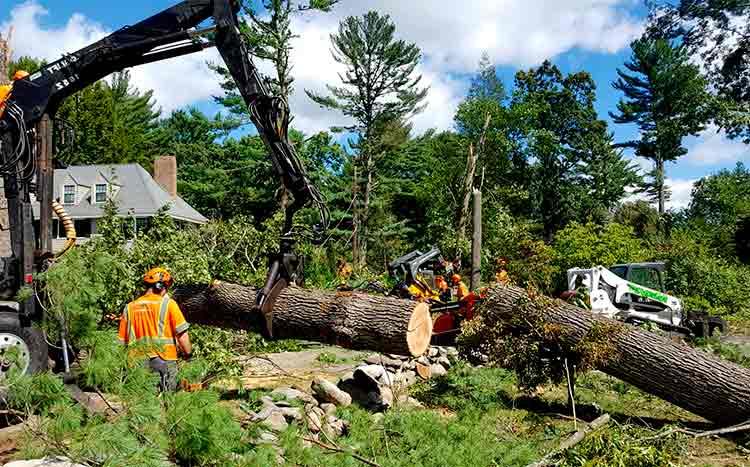 FAQ's free tree removal