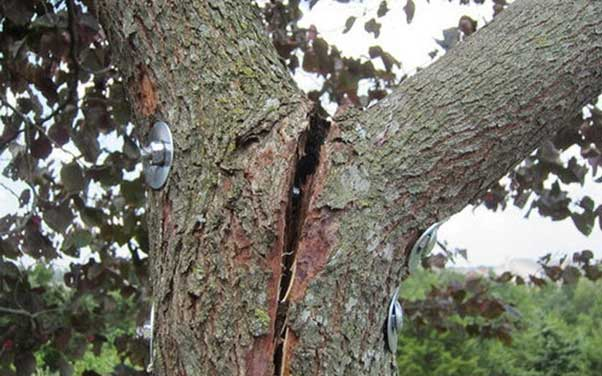 Repair split bark