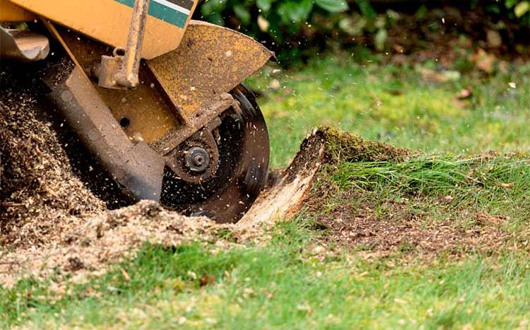 Stump Grinding Service Tips