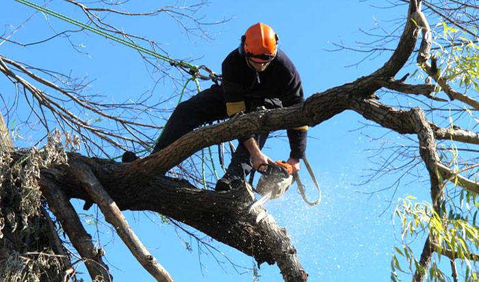 Tree removal permit Ann Arbor v2