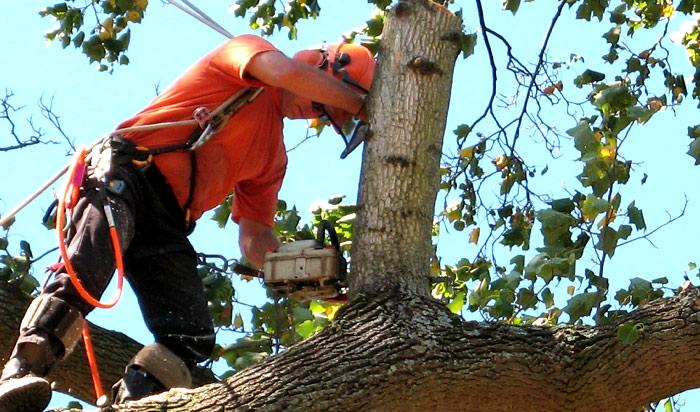 Tree removal permit Canton v2
