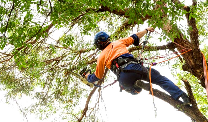 Tree removal permit Dearborn v2