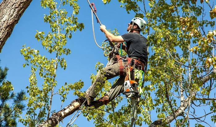 Tree removal permit Detroit v2