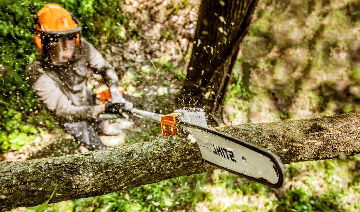 Tree removal permit Lansing v2