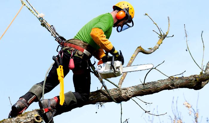 Tree removal permit Livonia v2