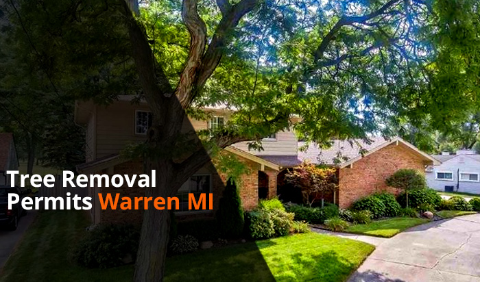Tree removal permit Warren v1