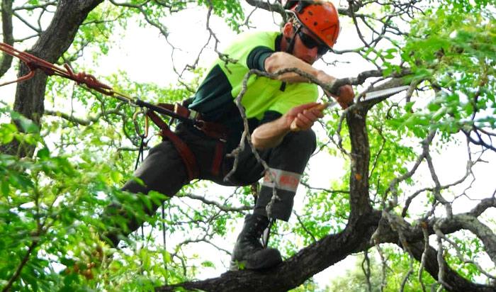 Tree removal permit Warren v2