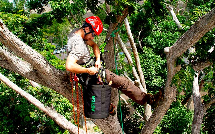 What is a level 3 arborist