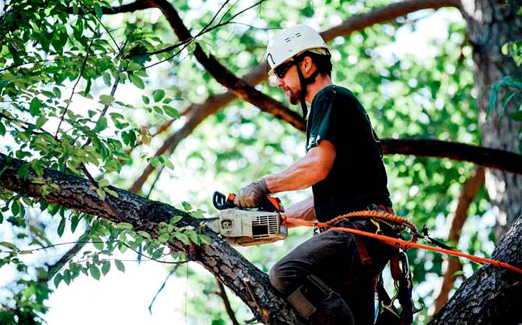 What is a level 5 arborist
