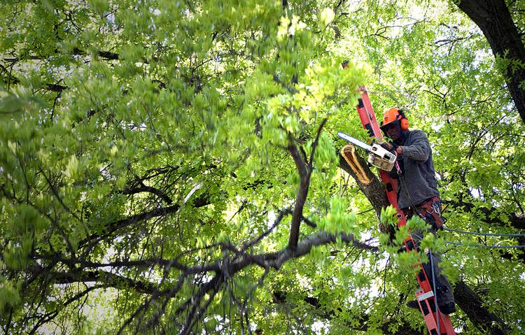 finding a good local arborist