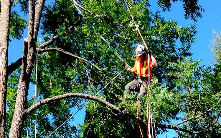 Affordable tree services near me