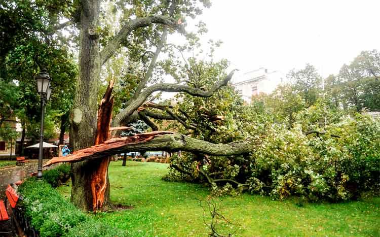 How do you storm proof a tree broken tree