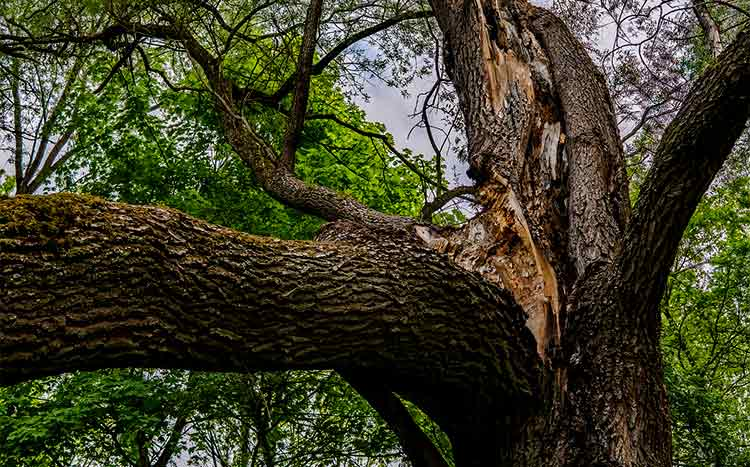 What to do when a branch breaks off a tree