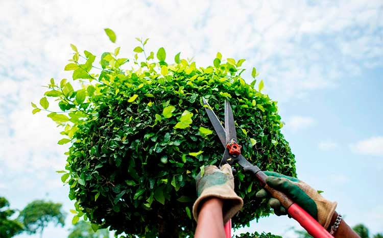 choosing good shrub