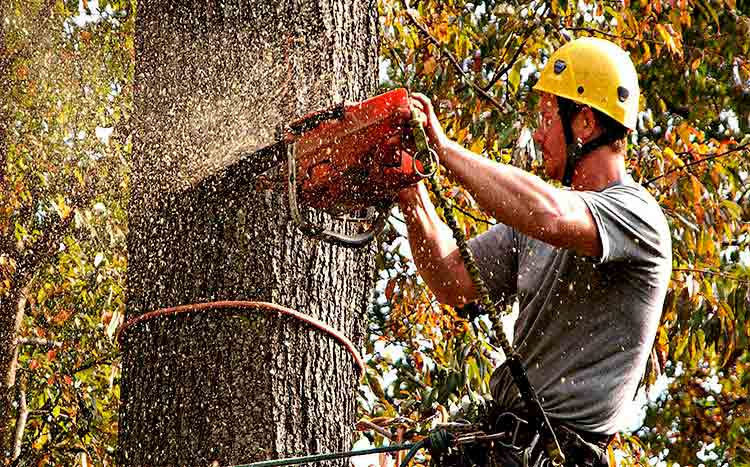 Questions to ask a professional tree service before hiring Professional tree service