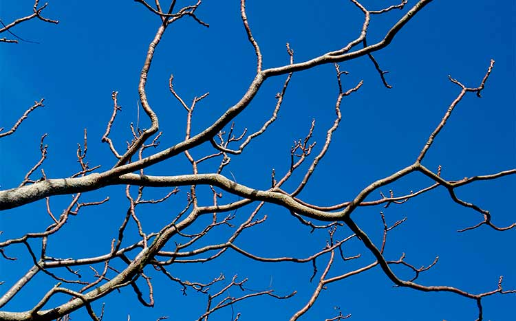 Difference Between a Branch and a Limb
