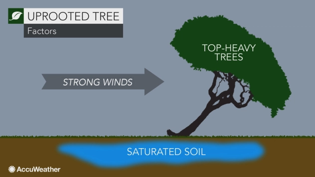 Does tree height effect tree falling