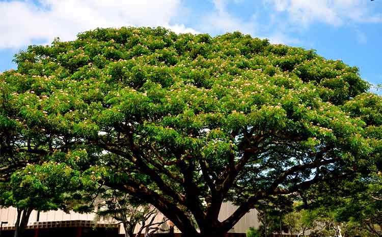 FAQ's tree health assessments