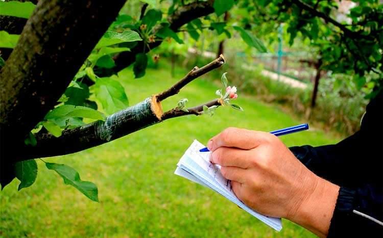 FAQ's tree inspection