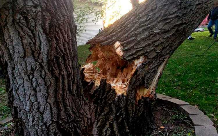FAQ's trees fall