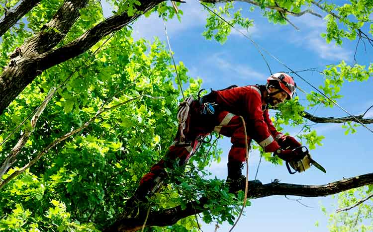 How is tree inspection performed arborist