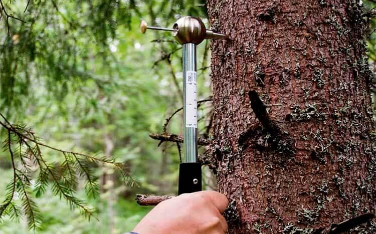 How often do I need a tree inspection