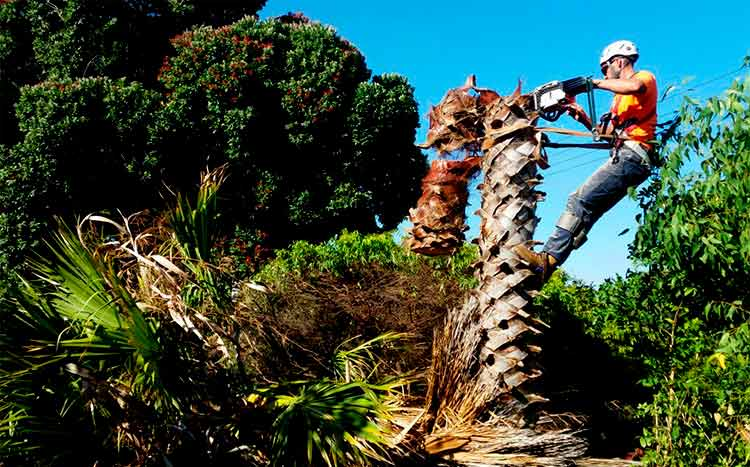 Use this free service to find a palm tree cleaning service near you