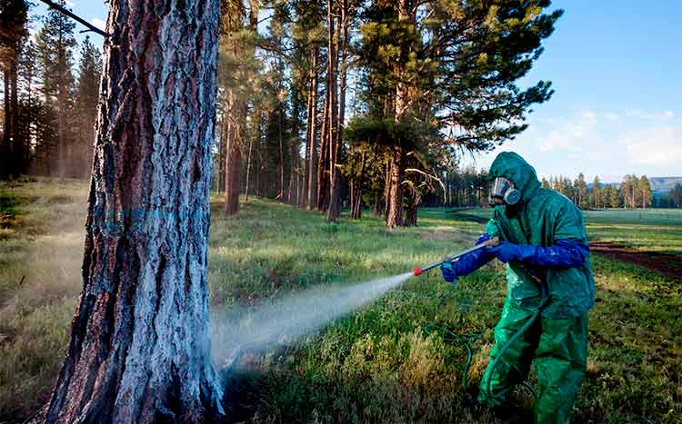 What Insecticide to Use for Trees health trees