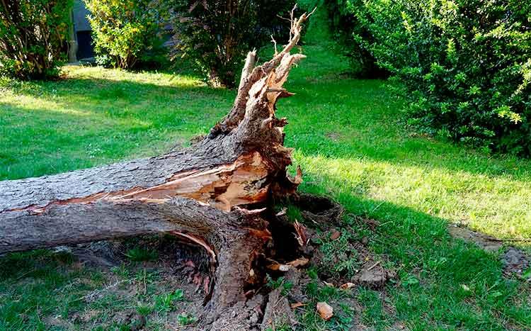 Why do trees fall