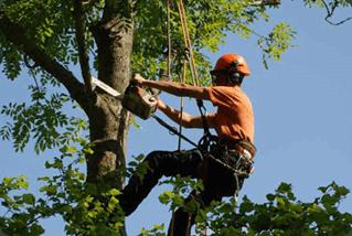 tree trmming cost