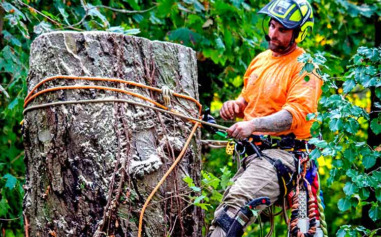 Tips on Hiring a Large Tree Removal Professional