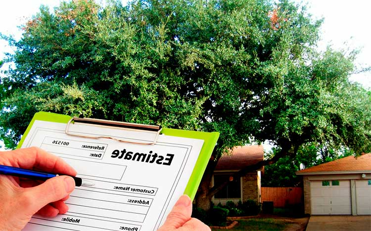 Tree Service Free Get 3 Quotes Online Now