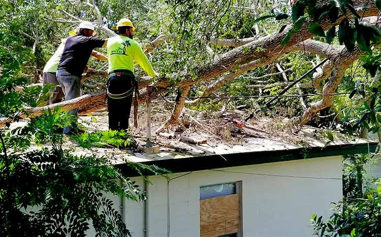 Why tree removal is expensive