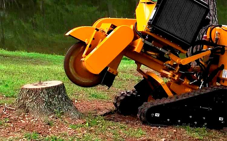 What is the Difference Between Stump Grinding and Stump Removal